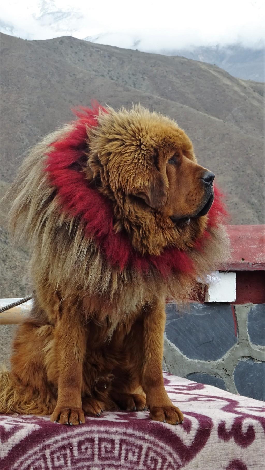 Mastiff 4